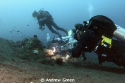 Teeth cleaning by the local shrimps. Diver is Tom Bligh, ... by Andrew Green 